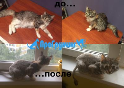 стрижка животных в Москве