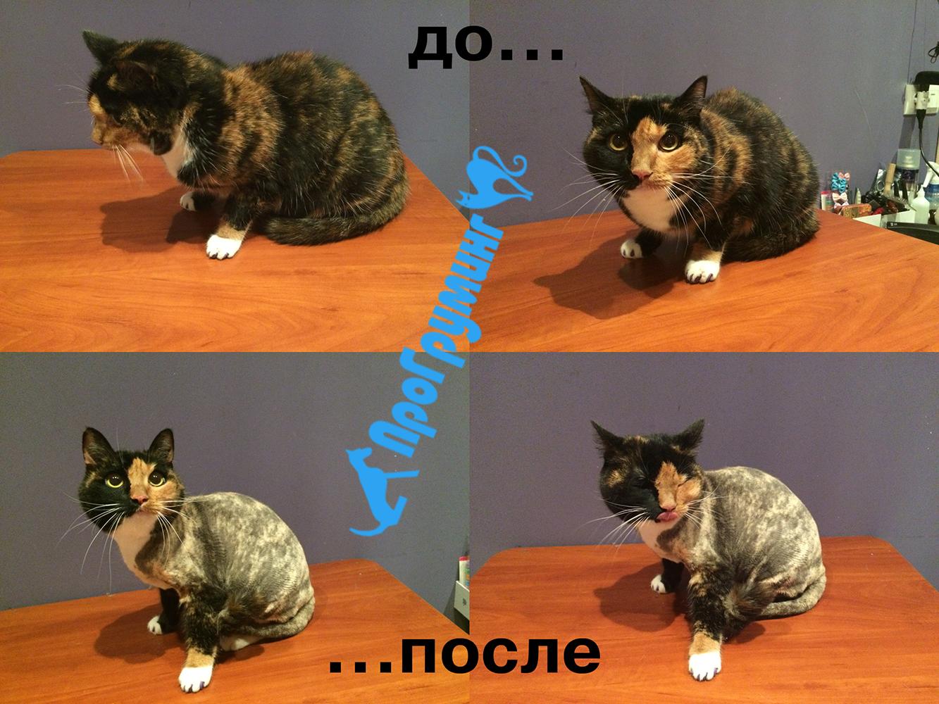 Стрижка кошек на дому в Москве