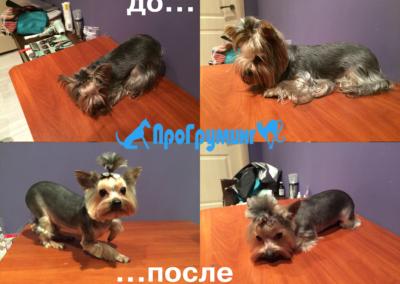 Стрижка собак на дому в Москве