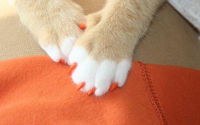 Удаление когтей у кошек — операция «Мягкие лапки»